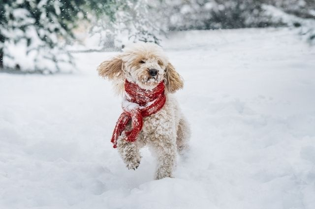 Ways To Make Winter Safer for Your Pets