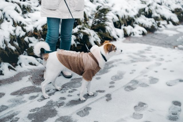 Ways To Get Active Outdoors During Winter