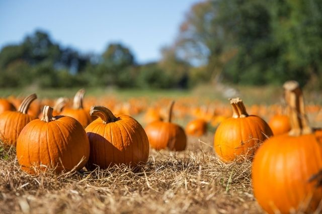 Unexpected Uses for Pumpkins To Try This Fall